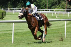 Paardenrennen Galop